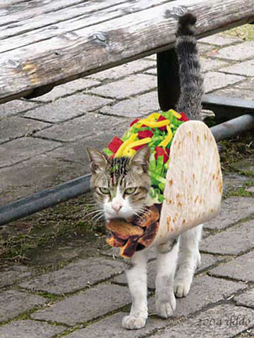 Poor taco kitty.